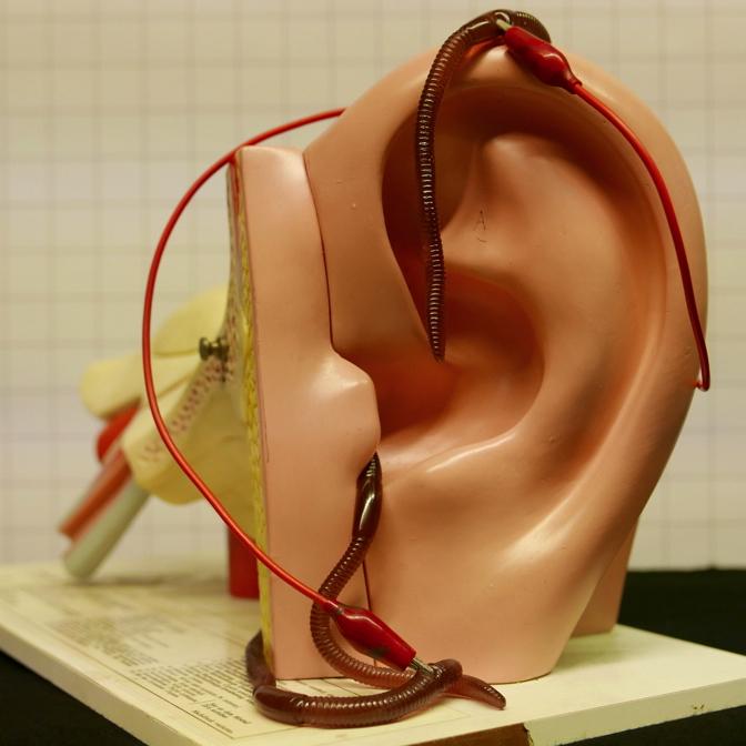 Das Ohrwurm Experiment